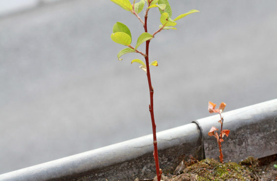 Frühjahrsputz - auch für die Dachrinne ist das wichtig!