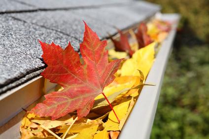 Der Herbst steht auf der Leiter